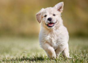 adoption chiot, comment bien choisir son chiot