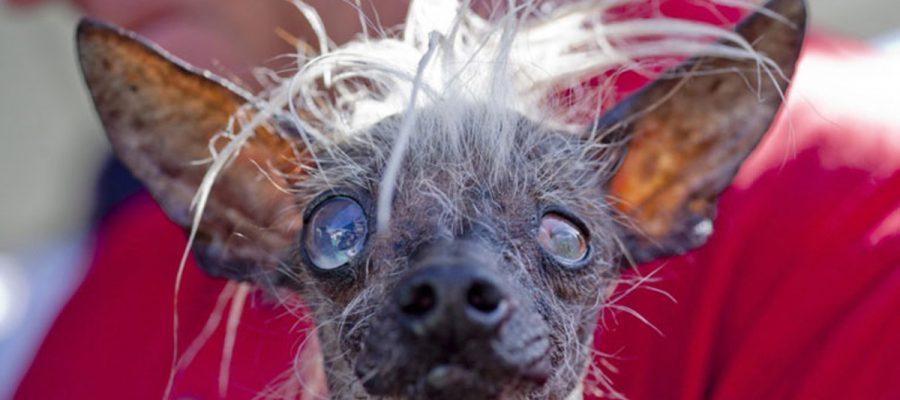 Le bloblog, c'est le blog des animaux qui propose des vidéos insolites avec des chiens hors du commun
