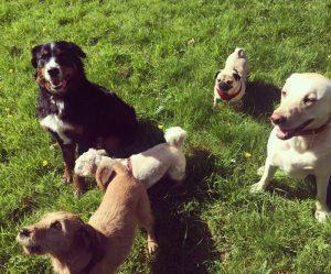 Les chiens se réjouissent des balades à Bruxelles et dans le Brabant Wallon